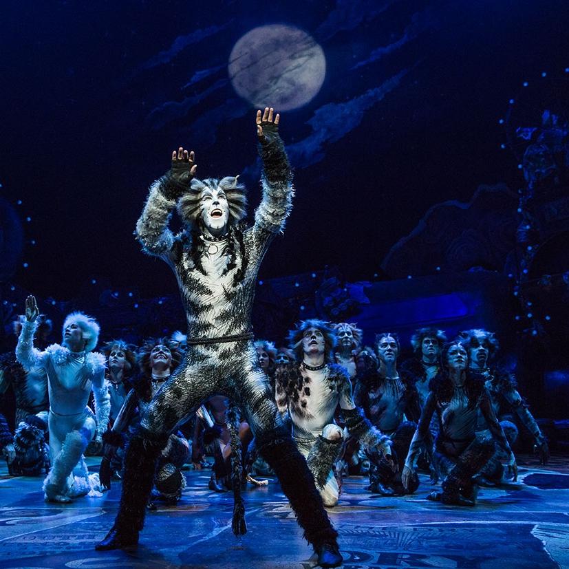 Cats Broadway Musical 2016 Revival Ibdb